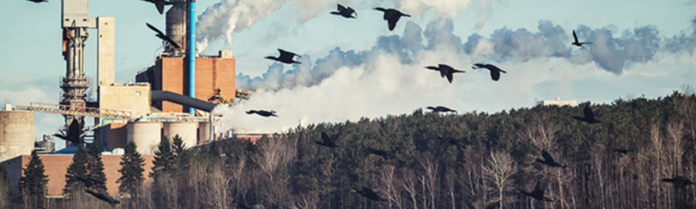 Birds flying over water in front of industrial smoke stacks spewing out smoke.