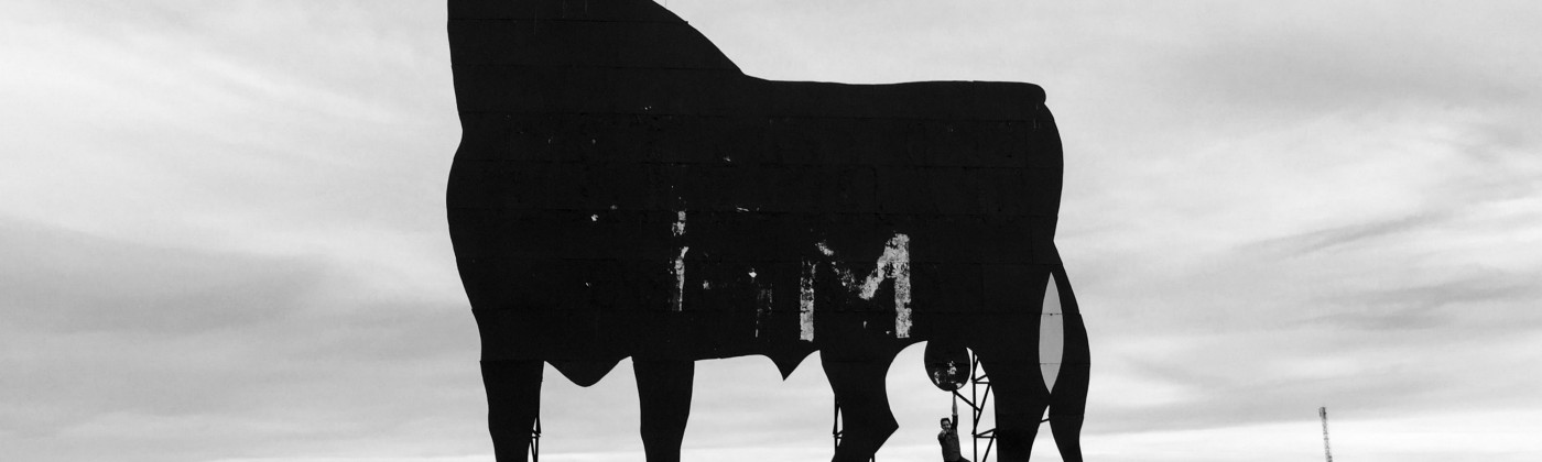 This bull was photographed in silhouette to protect it's identity