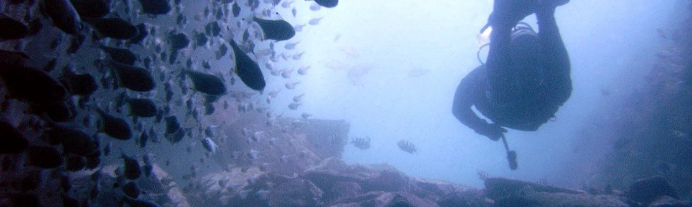 Diver in murky water confronting fish schooled to one side
