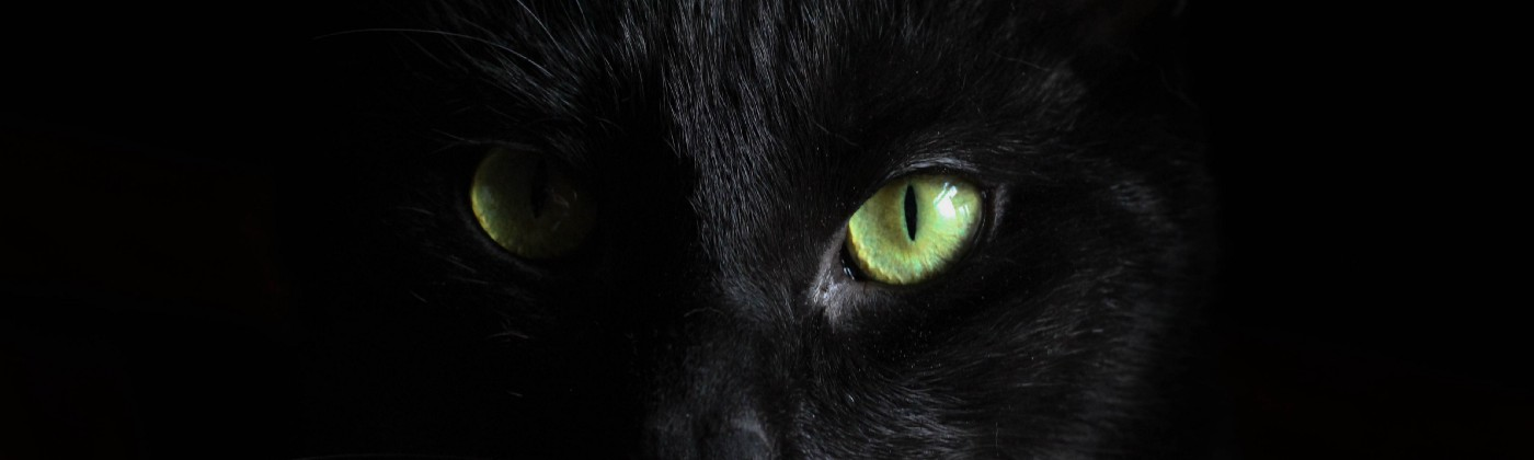 close up image of a black cat's face