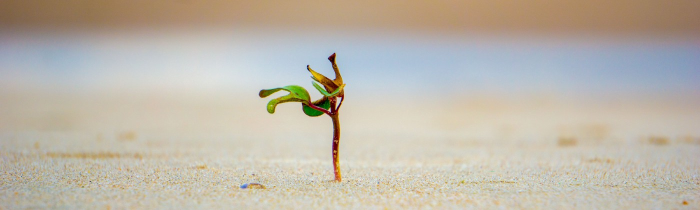 Solo plant sprouting from sand.
