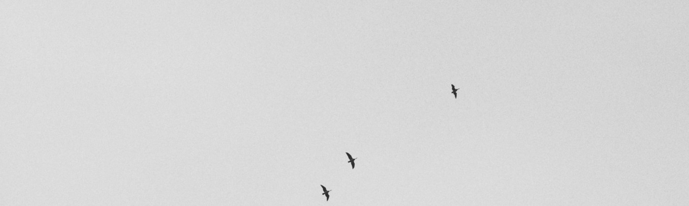 Birds forming a sparse question mark in the sky