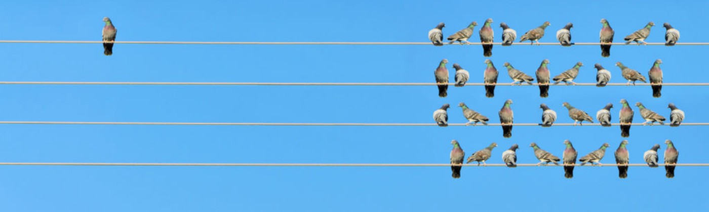 an unbalanced arrangement of birds on utility wires