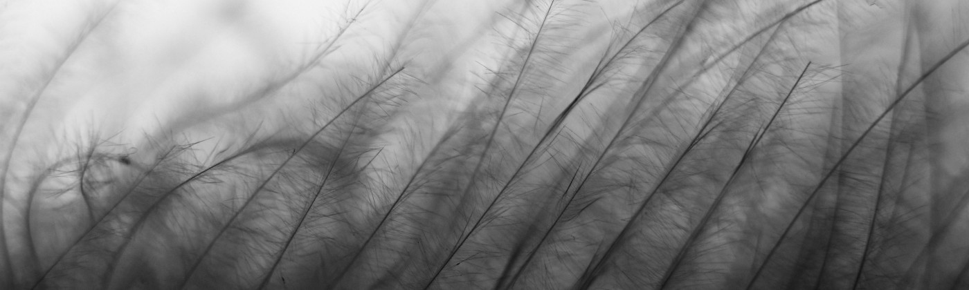 An image of feathers