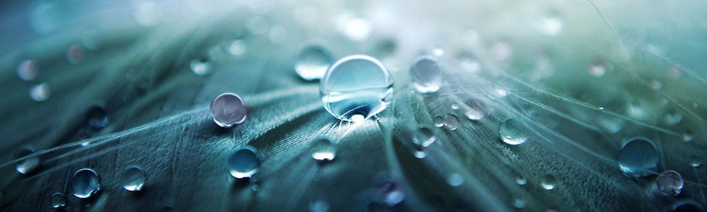 Photo: closeup of emerald & blue leaf with perfectly circular waterdrops on its waxy lawyer. Soft, grey light.