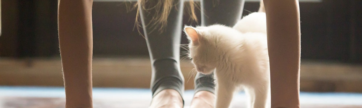 woman doing yoga with a white kitten