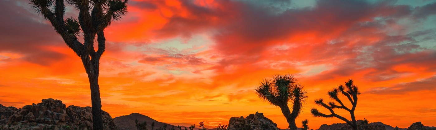 Fiery Sunset in Joshua Tree National Park with three small trees and rocky terrain in the foreground.