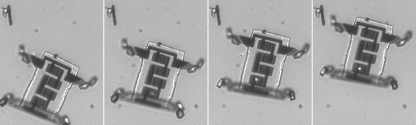 Microscopic images of the researchers' robot flexing its legs and crawling.