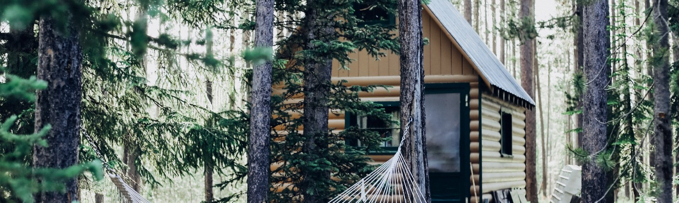 A cabin surrounded by pine trees with a hammock in the foreground.