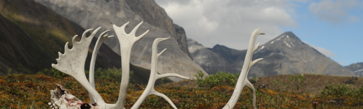 Antlers in Oolah Valley, Gates of the Arctic National Park and Preserve