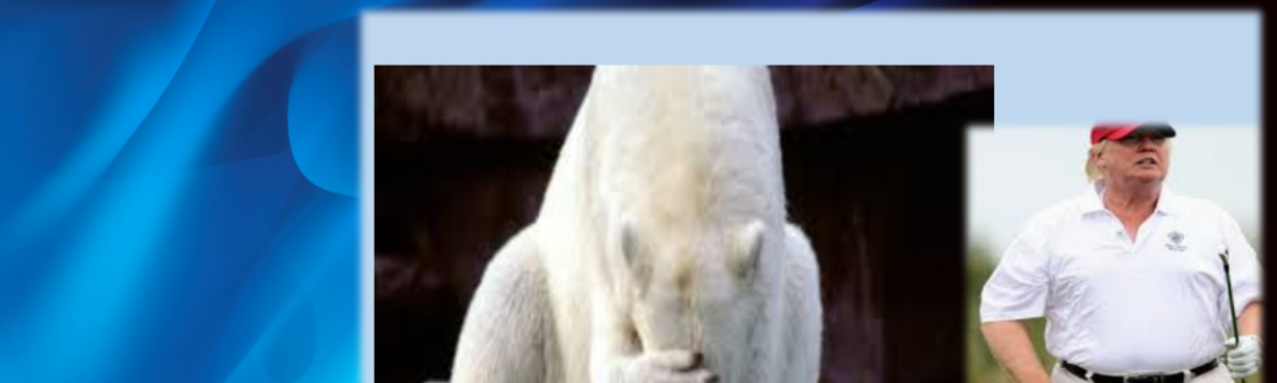 polar bear with head in paw and trump looking at golf shot
