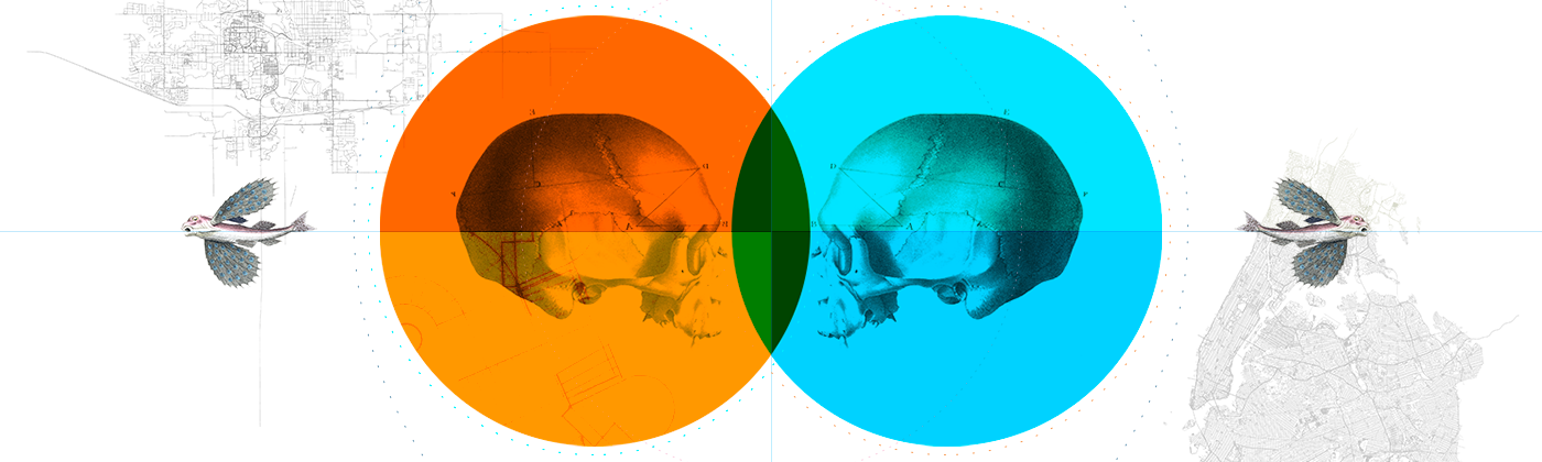 An illustration of two skulls facing each other, each surrounded by an orange and blue circle