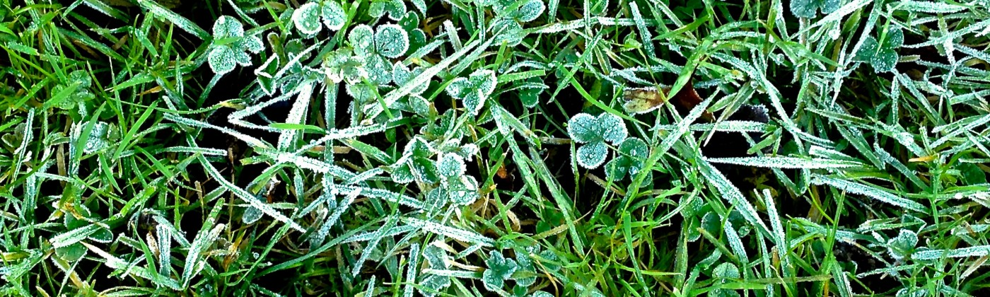 Micro view of blades of grass and clover. Green.