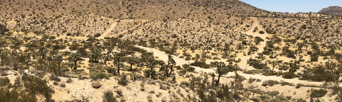 A photo of desert landscape with brush plants and cacti under a clear blue sky.