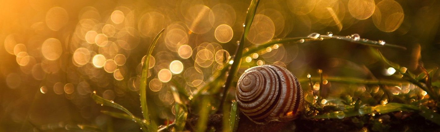 Snail on grass with fantasy-style backlighting