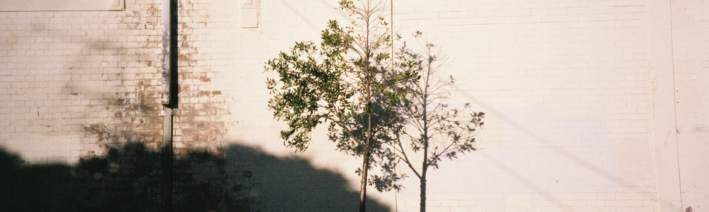 A tree against a wall