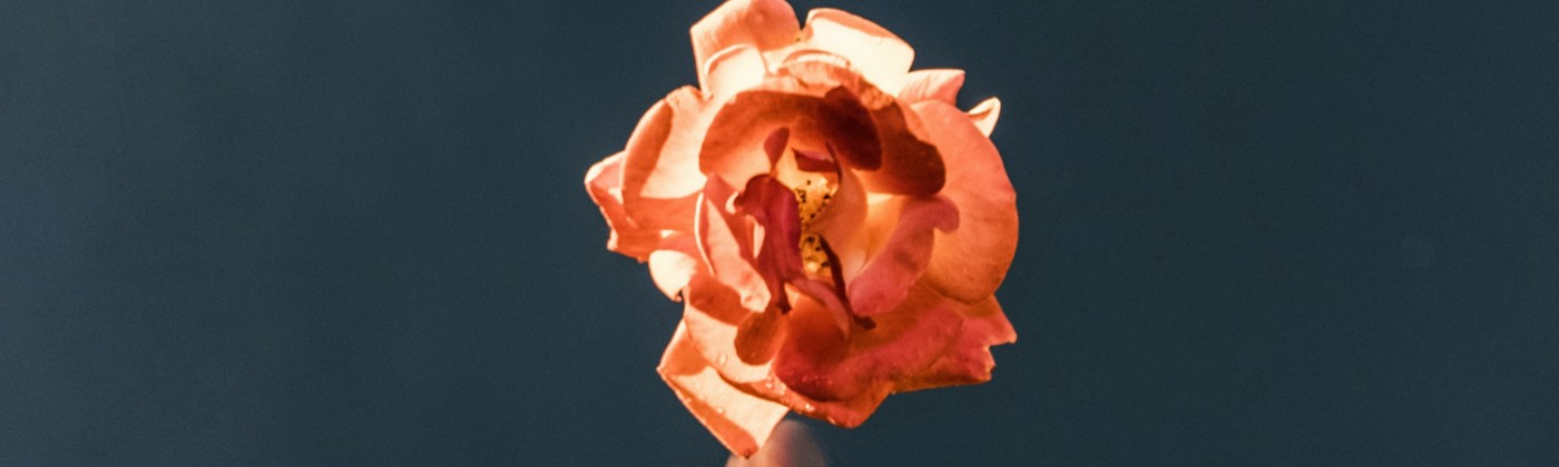 Slowshutter frame of blurred hand reaching up to perfectly focused peach rose, green-black background.