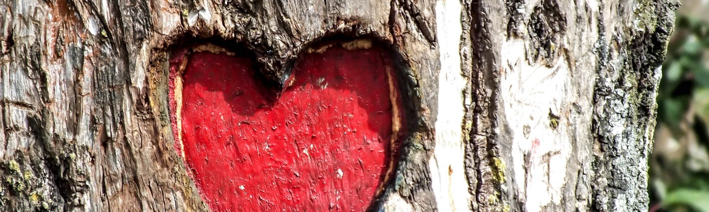 Red heart carved onto a tree