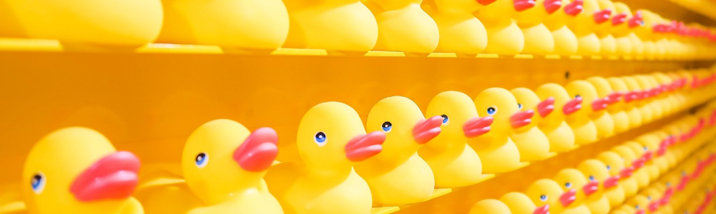 Rows and rows of rubber ducks on a wall.