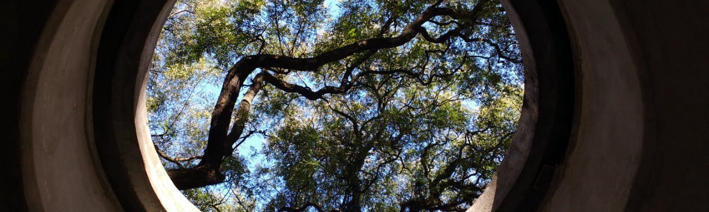Photo looking up at large tree, blue sky, through circular concrete opening.