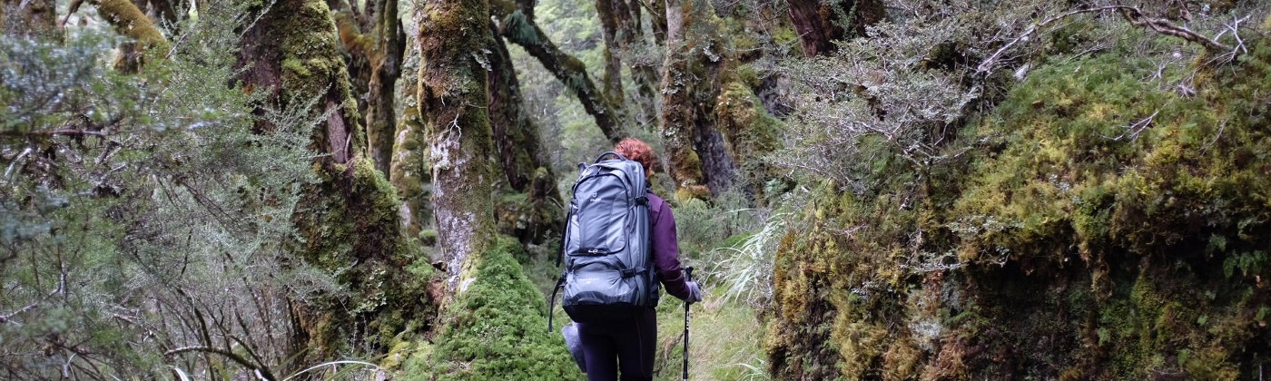 Image of me heading off into the woods of New Zealand on a three day hike