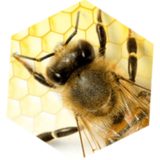 Top 7 Tips for Getting Rid Of Beehive without Killing Bees