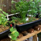 An Aquaponics How To