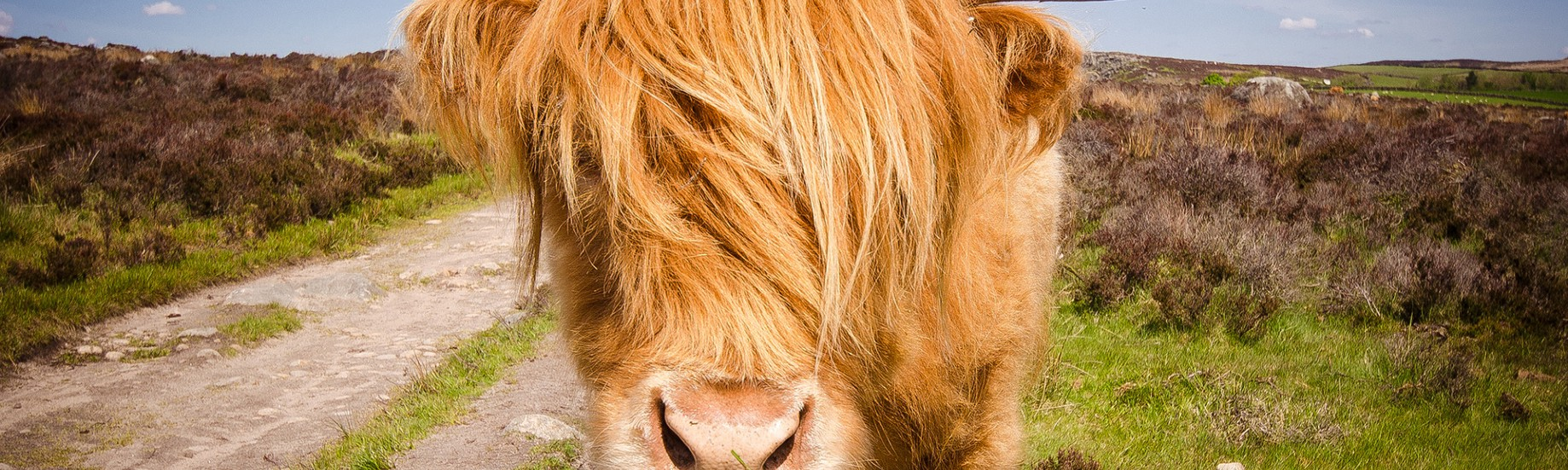 A Guide to Yak Shaving Your Code - The Firehose Project - Medium