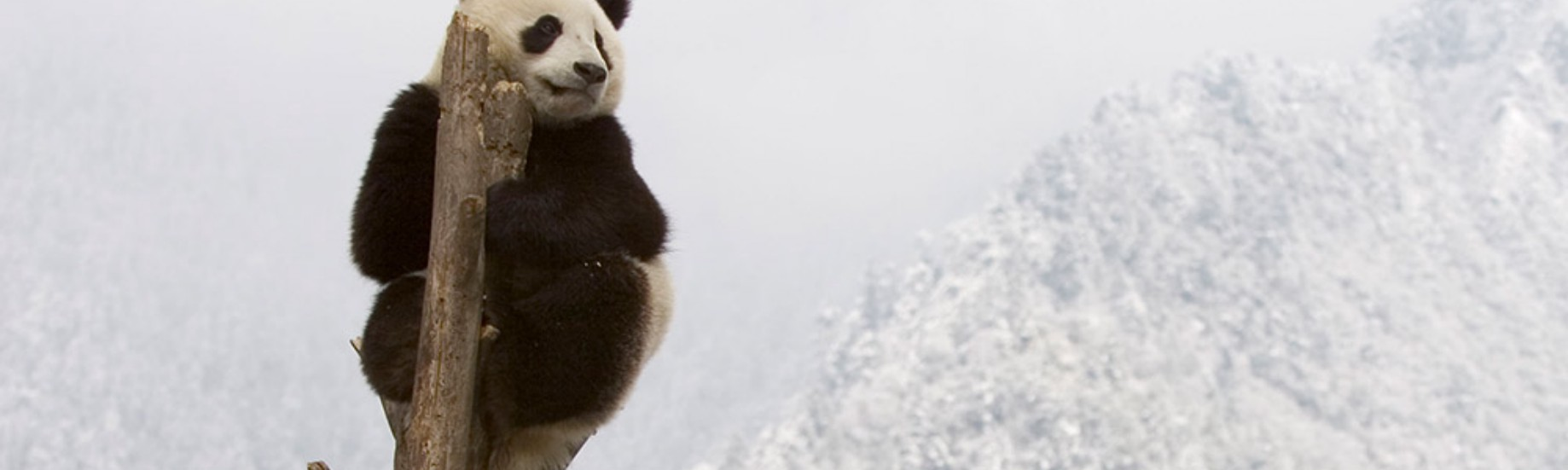 Pandas for time series data — tricks and tips - Adrian G