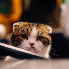 Cat with annoyed expression.
