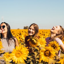 Three laughing female friends in a field of sunflowers.