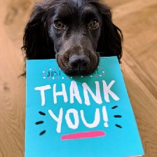 """Dog with """"Thank You"""" card in mouth."""