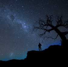 A lone person at night under a tree looking at the stars.