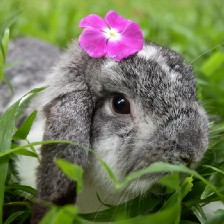 grey-and-white lop-eared rabbit with a fuschia blossom on its head.