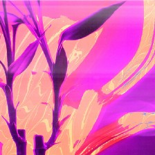 A purple, pink, and orange digital collage of a plant with paint swirls behind it, evoking energy.