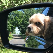 Photo of our dog Max looking out the rearview car mirror.