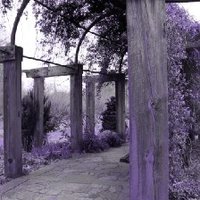 Color Infrared picture at Arboretum with purple foliage.