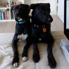 Two dogs resting their paws near an open laptop