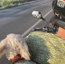 a man driving a vespa in italy with a tiny white poodle behind him. she looks into the mirror and you can see her face. traveling. italy. rimini. vespa.