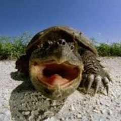 Snarky Turtle