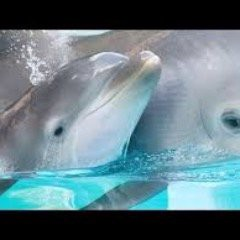Dolphins R Persons