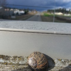 The Snail's Thoughts