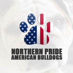 Northern Pride American Bulldogs
