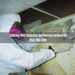 Catstrong Mold Inspection and Removal Jacksonville