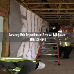 Catstrong Mold Inspection and Removal Tallahassee