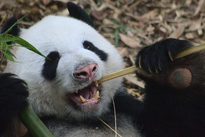 How to Rename Columns in Pandas—A Quick Guide
