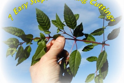How to Propagate New Plants From Cuttings