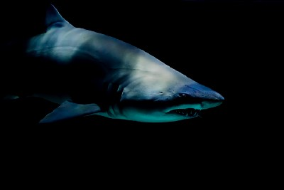 The shark, a rope walker, and an equity investor