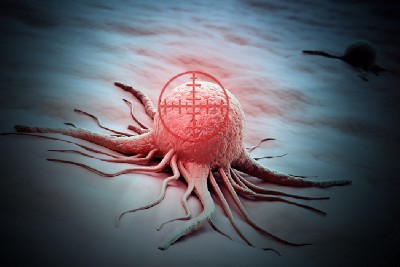 Scientists are engineering the immune system to be more aggressive towards cancer cells