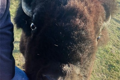 Back to Buffalo: How One Ranch is Trusting Nature to Restore the Great Plains